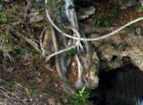 Campismo Las Cuevas